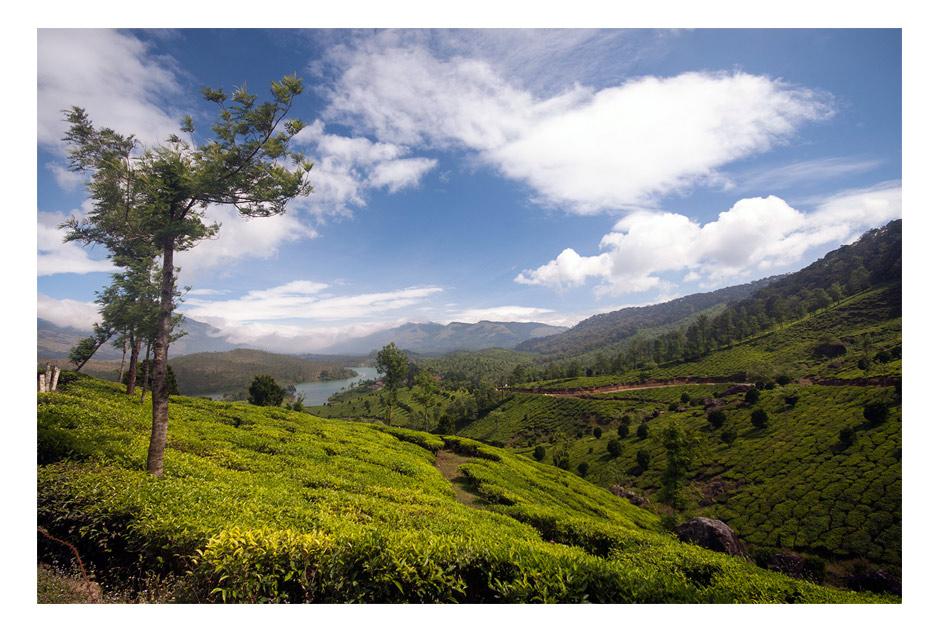 Tea plantations of Munnar, Kerala